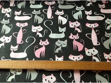 barevné kočky na černém
