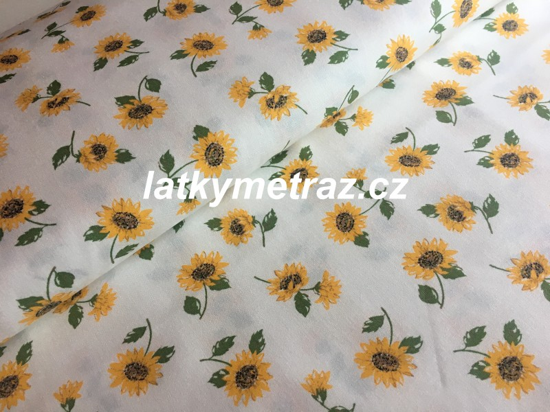 slunečnice na bílém